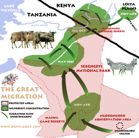 Map of the great migration in Masai Mara-Serengeti